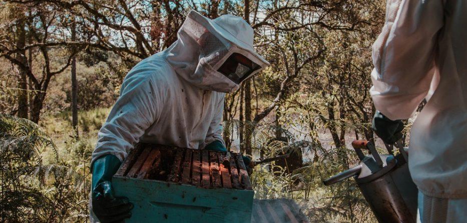 apicultor-sierra-nevada