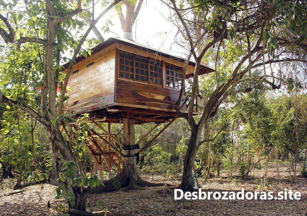 Cómo Construir Una Casa En El árbol Los Mejores Consejos De Construcción Azperiodistas