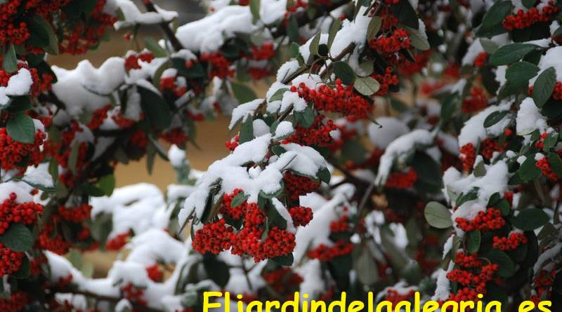 jardin-al-aire-libre-en-invierno-Eljardindelaalegria